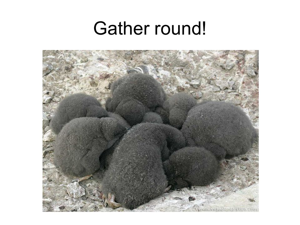 Gather round!