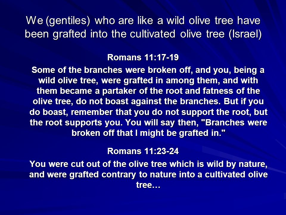 We (gentiles) who are like a wild olive tree have been grafted into the cultivated olive tree (Israel)