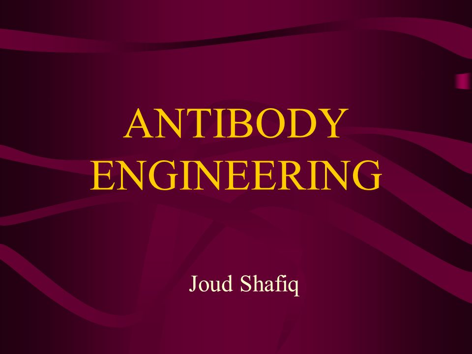 ANTIBODY ENGINEERING Joud Shafiq