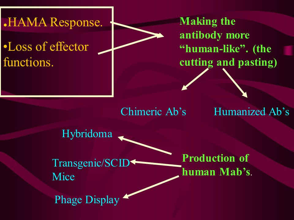 .HAMA Response. Loss of effector functions.