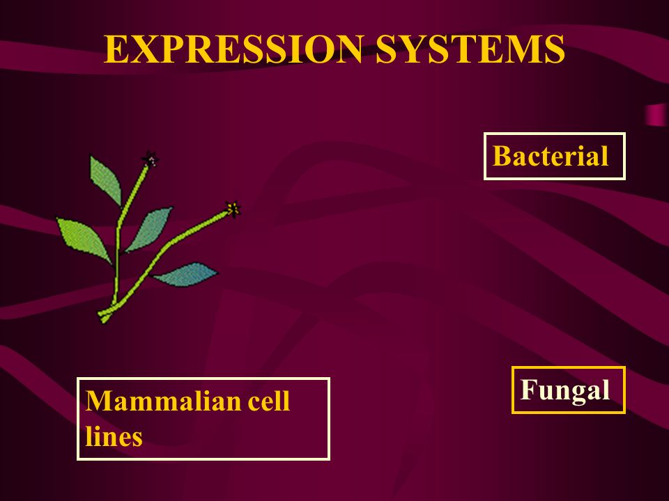 EXPRESSION SYSTEMS Bacterial Fungal Mammalian cell lines