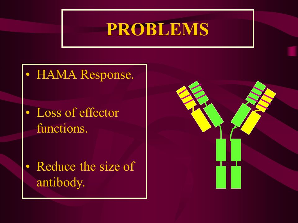 PROBLEMS HAMA Response. Loss of effector functions.