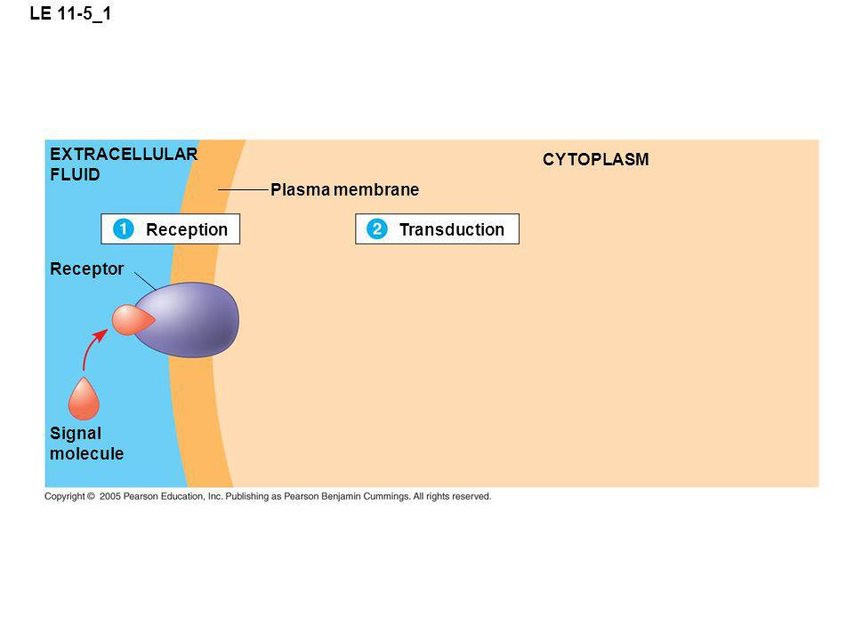 LE 11-5_1 EXTRACELLULAR FLUID CYTOPLASM Plasma membrane Reception