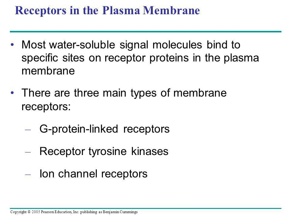 Receptors in the Plasma Membrane