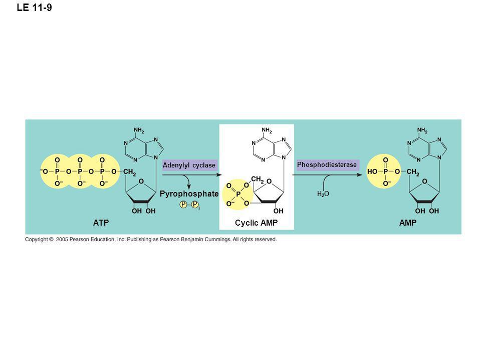LE 11-9 Pyrophosphate ATP Cyclic AMP AMP Adenylyl cyclase