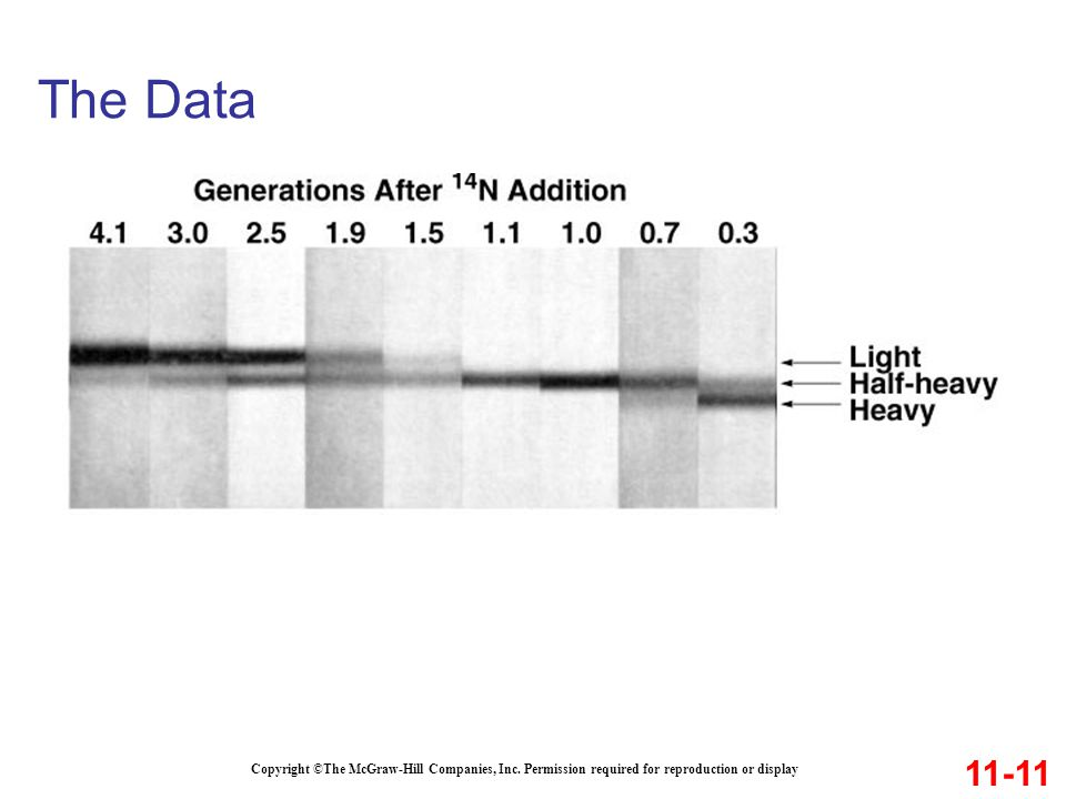 The Data 11-11. Copyright ©The McGraw-Hill Companies, Inc.