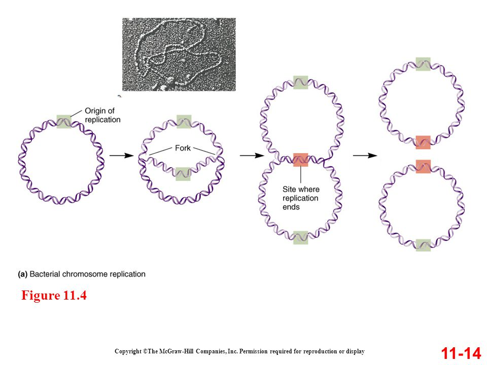Figure 11.4 11-14. Copyright ©The McGraw-Hill Companies, Inc.