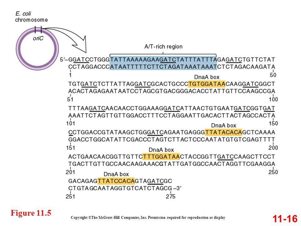 Figure 11.5 11-16. Copyright ©The McGraw-Hill Companies, Inc.