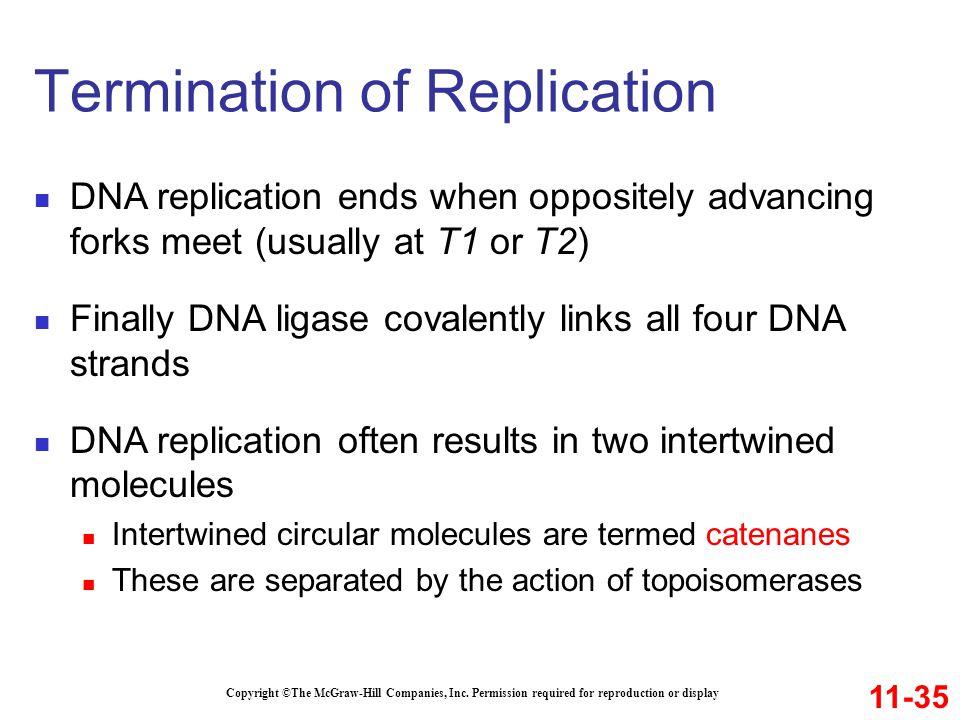 Termination of Replication
