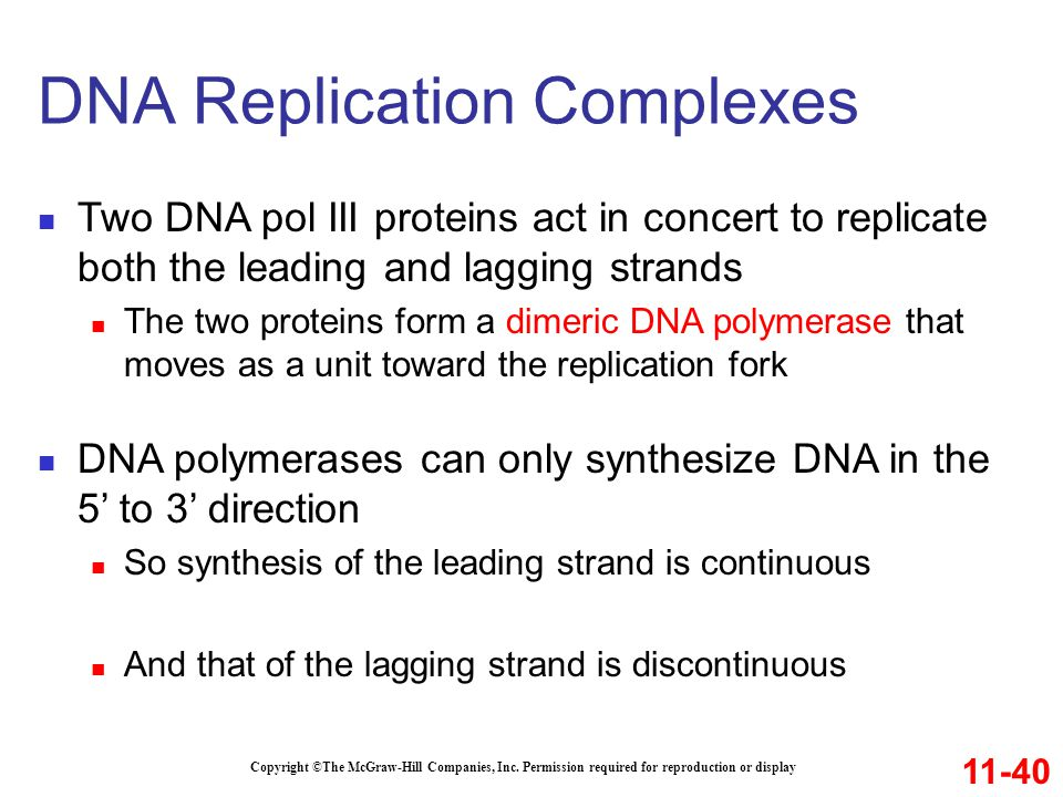 DNA Replication Complexes