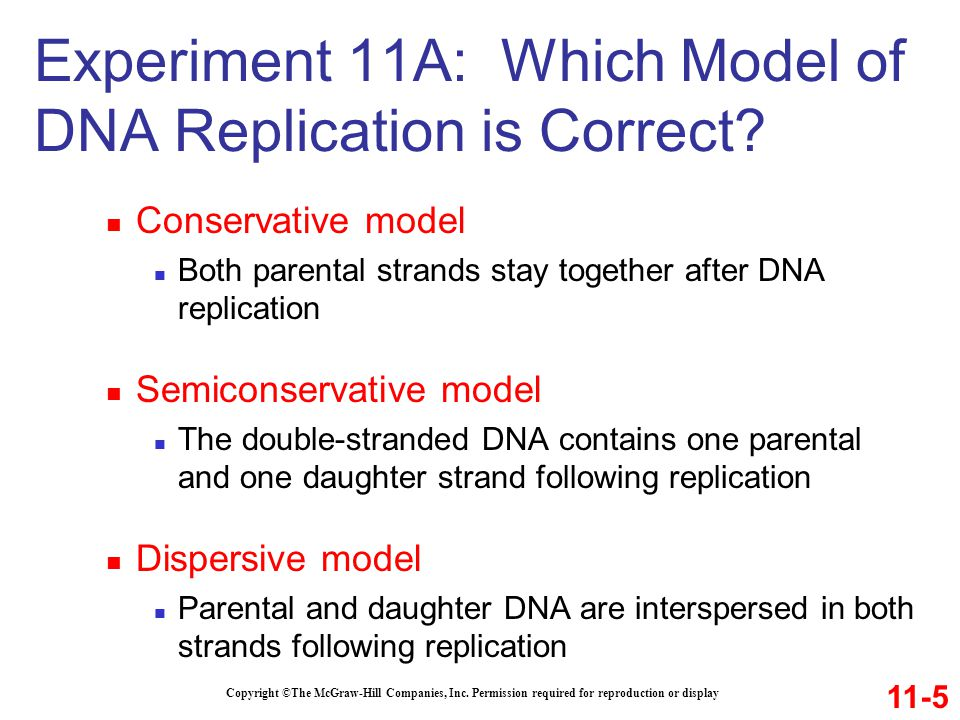 Experiment 11A: Which Model of DNA Replication is Correct