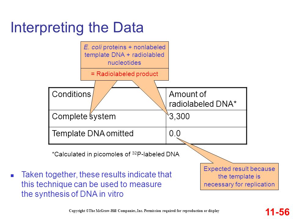 Interpreting the Data 11-56 Conditions Amount of radiolabeled DNA*