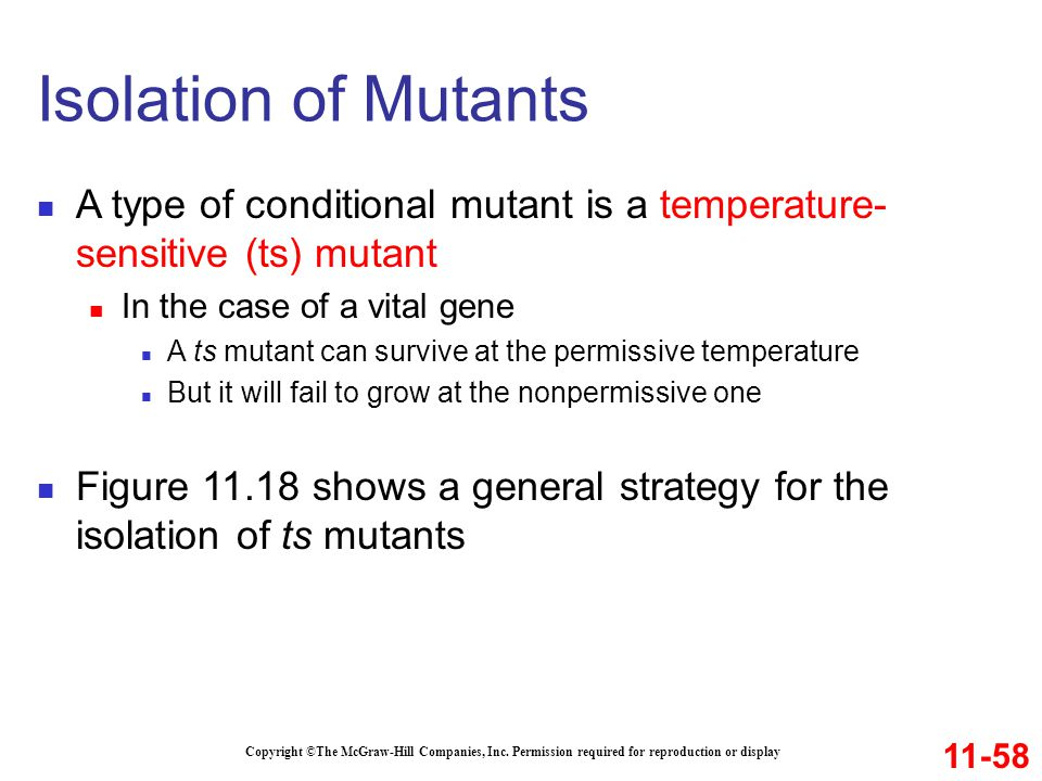 Isolation of Mutants A type of conditional mutant is a temperature-sensitive (ts) mutant. In the case of a vital gene.