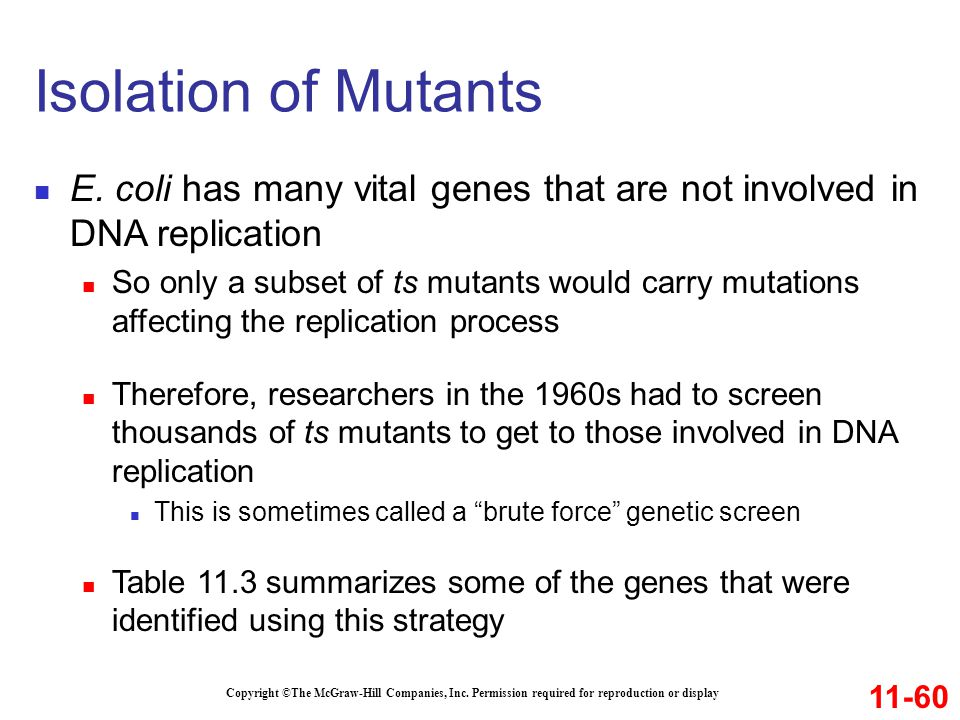 Isolation of Mutants E. coli has many vital genes that are not involved in DNA replication.