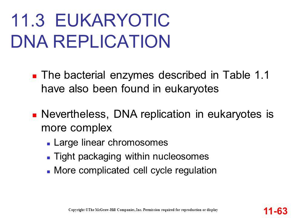 11.3 EUKARYOTIC DNA REPLICATION