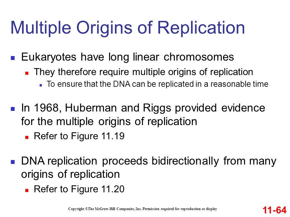 Multiple Origins of Replication