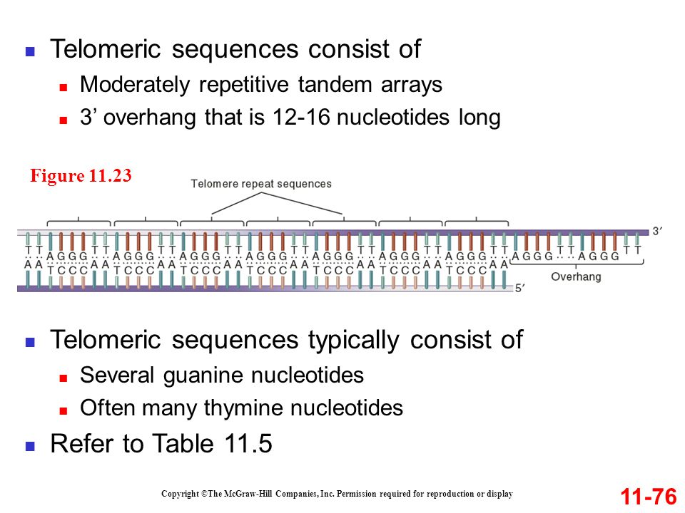 Telomeric sequences consist of