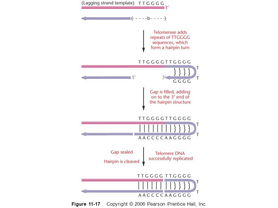 Figure 11-17 Copyright © 2006 Pearson Prentice Hall, Inc.