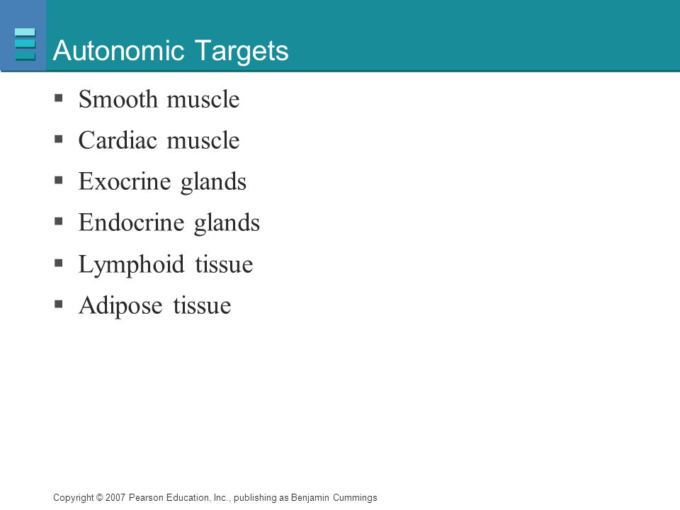 Autonomic Targets Smooth muscle Cardiac muscle Exocrine glands