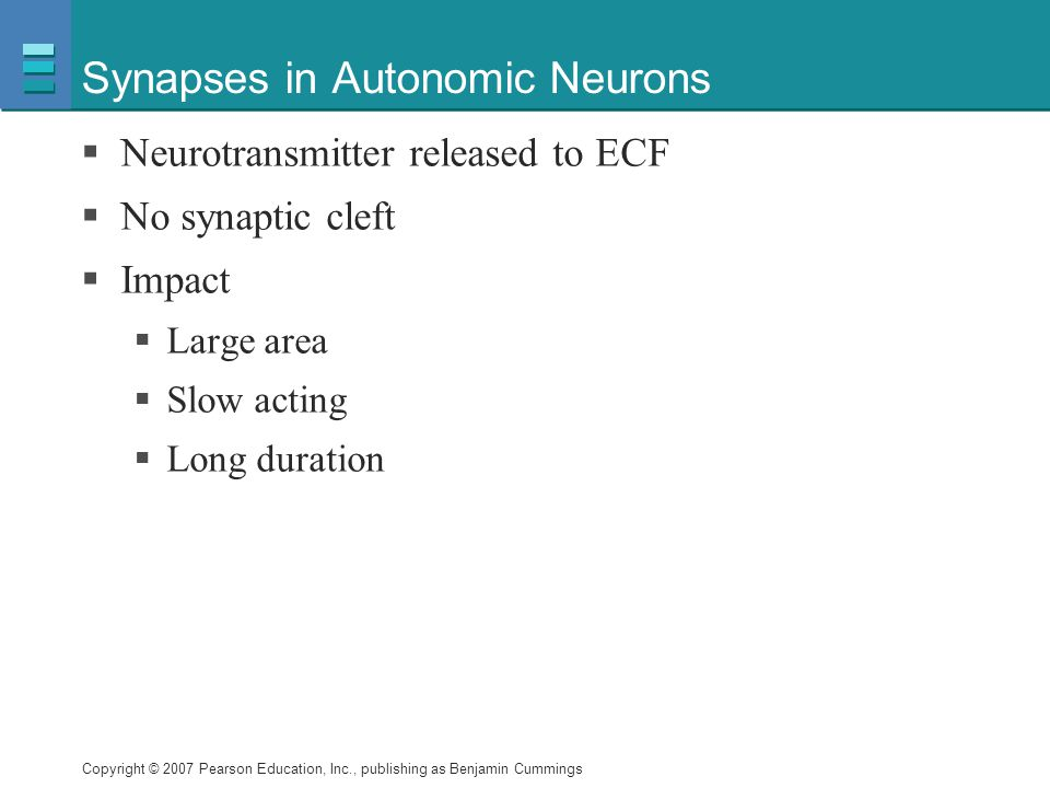 Synapses in Autonomic Neurons