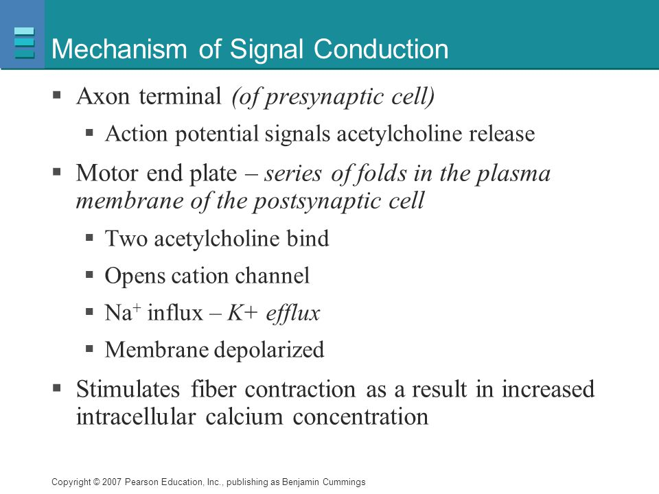 Mechanism of Signal Conduction