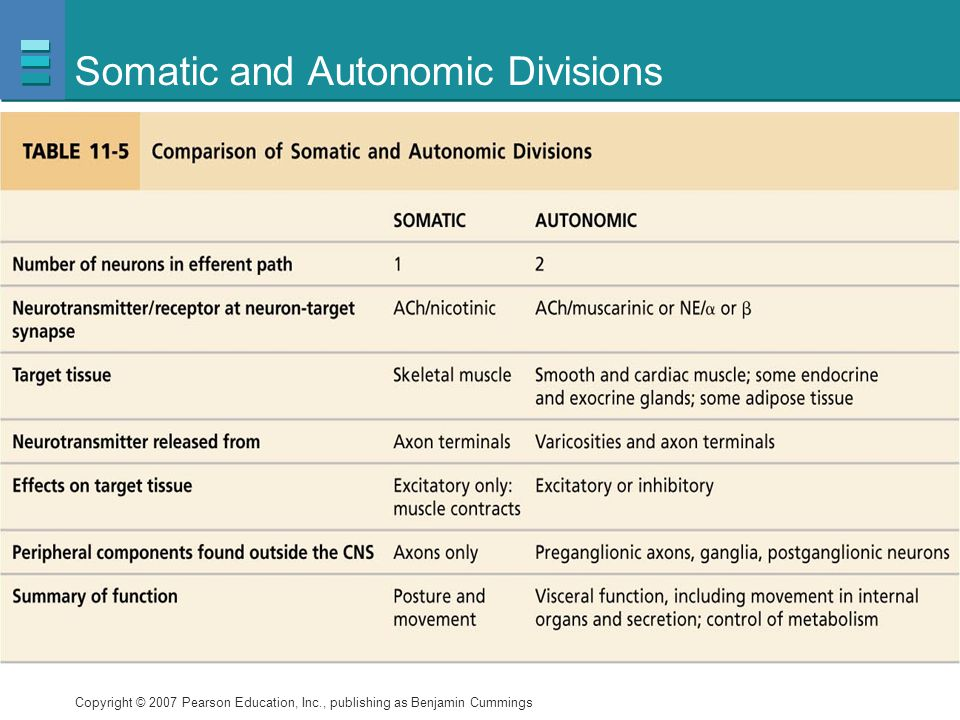 Somatic and Autonomic Divisions