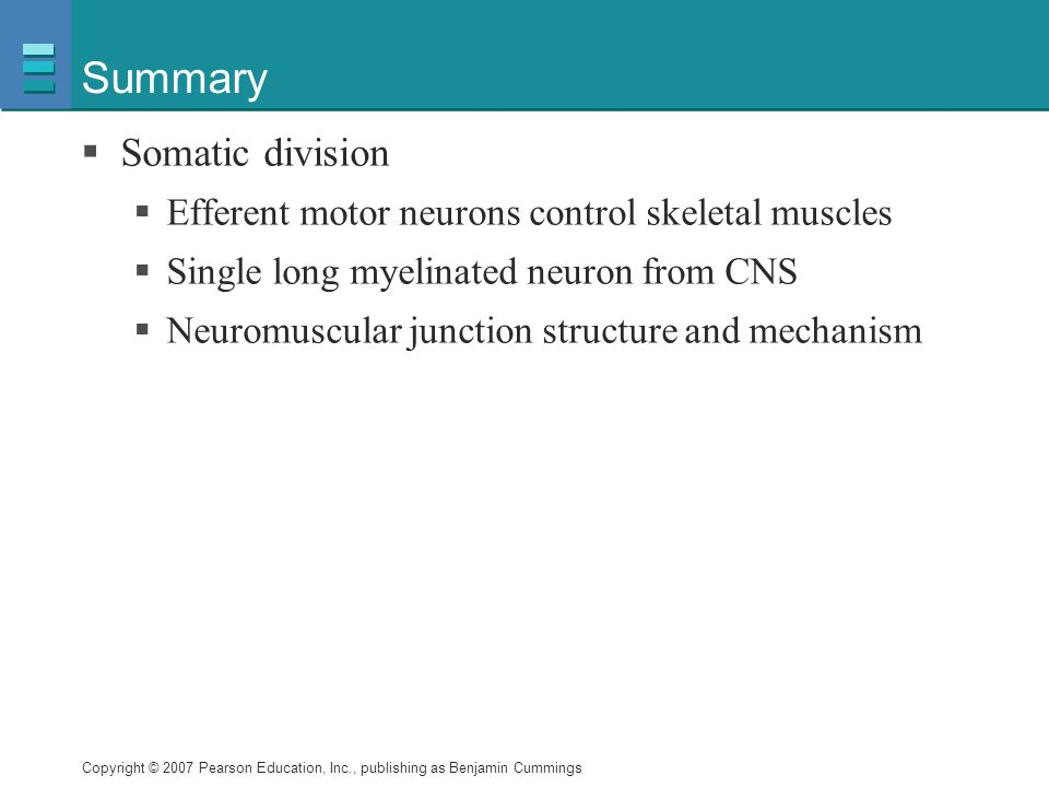 Summary Somatic division