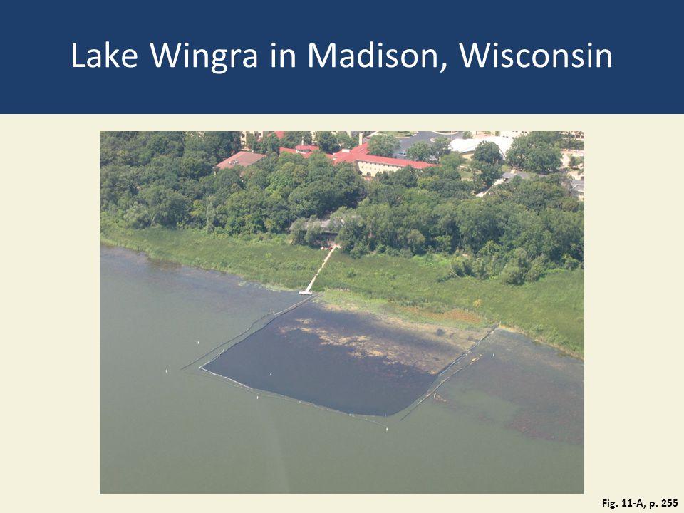 Lake Wingra in Madison, Wisconsin
