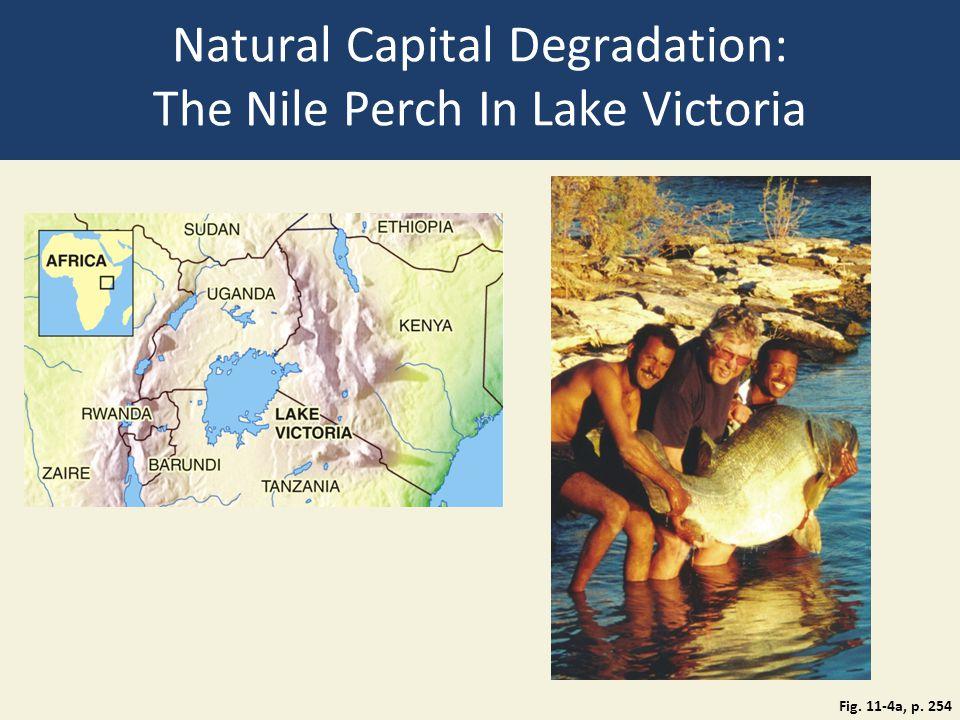 Natural Capital Degradation: The Nile Perch In Lake Victoria