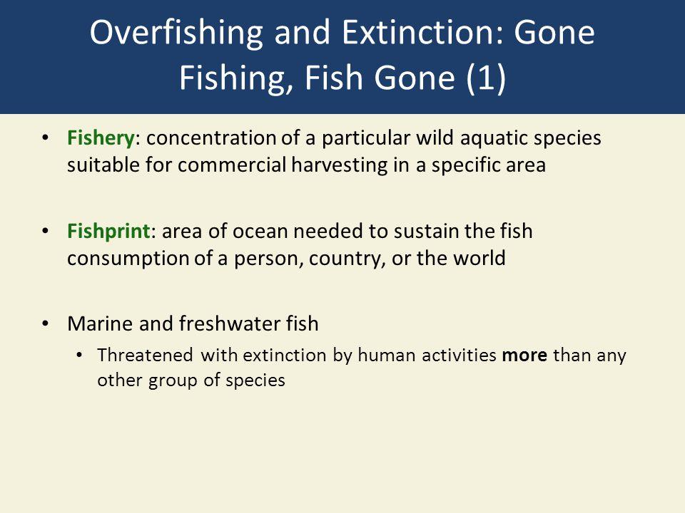 Overfishing and Extinction: Gone Fishing, Fish Gone (1)