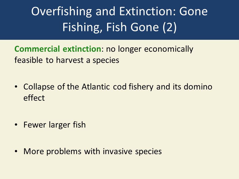 Overfishing and Extinction: Gone Fishing, Fish Gone (2)