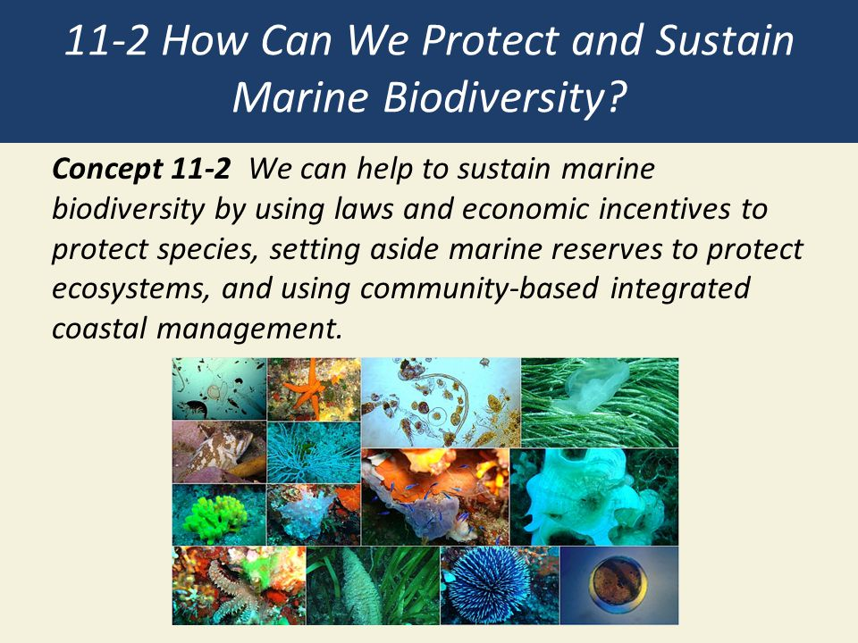 11-2 How Can We Protect and Sustain Marine Biodiversity
