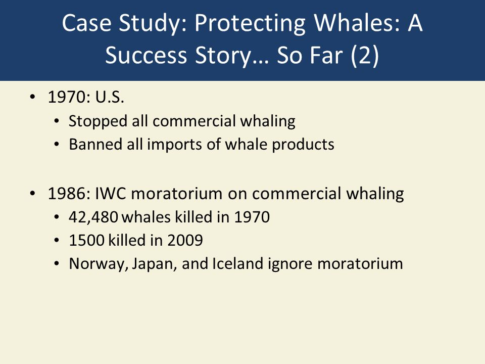 Case Study: Protecting Whales: A Success Story… So Far (2)