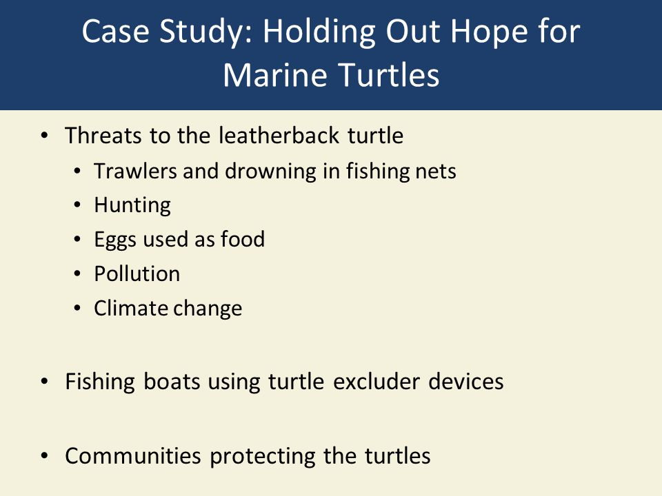Case Study: Holding Out Hope for Marine Turtles
