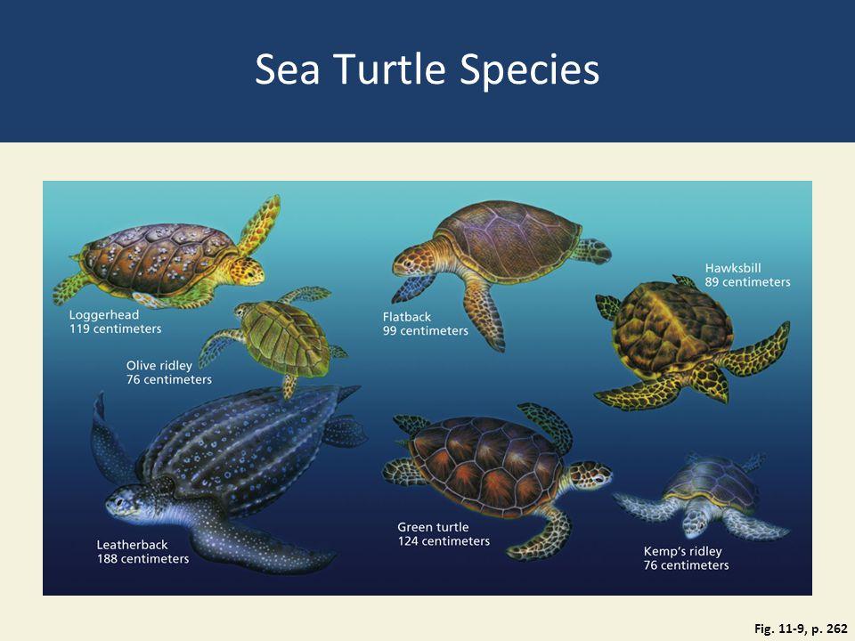 Sea Turtle Species