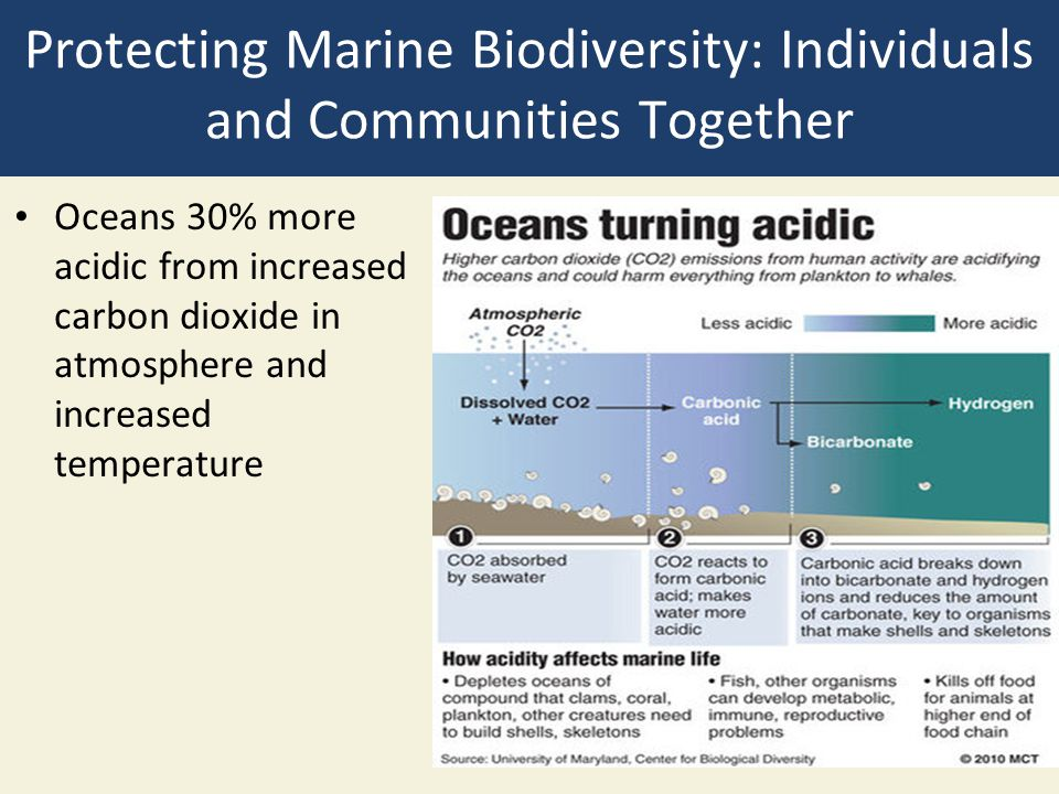 Protecting Marine Biodiversity: Individuals and Communities Together