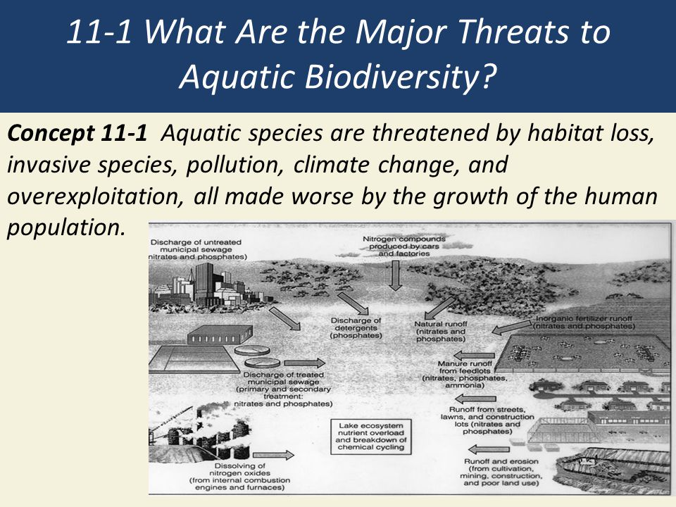 11-1 What Are the Major Threats to Aquatic Biodiversity