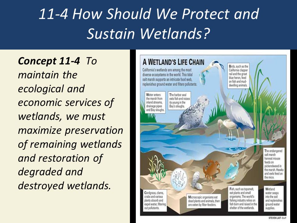 11-4 How Should We Protect and Sustain Wetlands