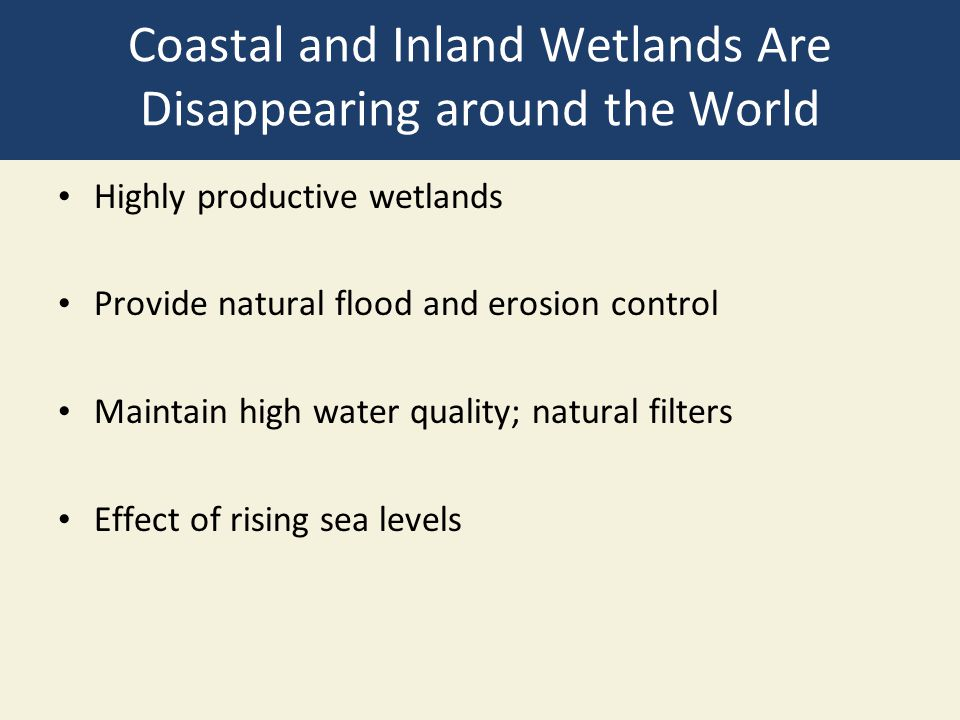 Coastal and Inland Wetlands Are Disappearing around the World
