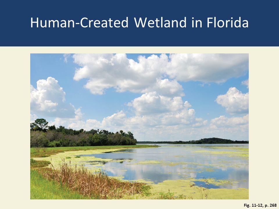 Human-Created Wetland in Florida