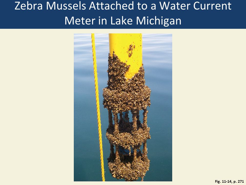 Zebra Mussels Attached to a Water Current Meter in Lake Michigan