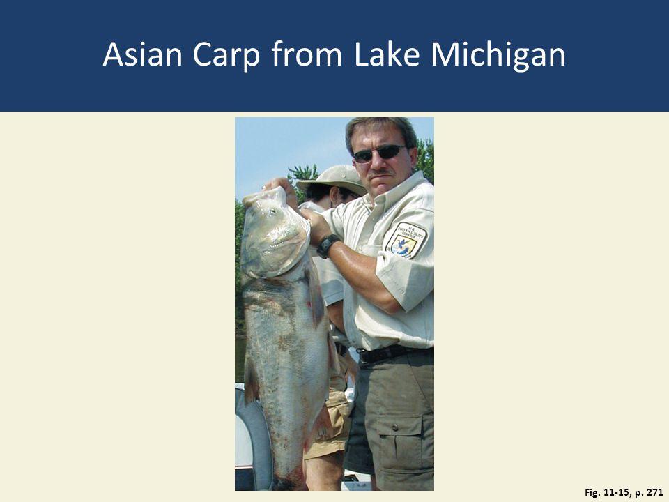 Asian Carp from Lake Michigan