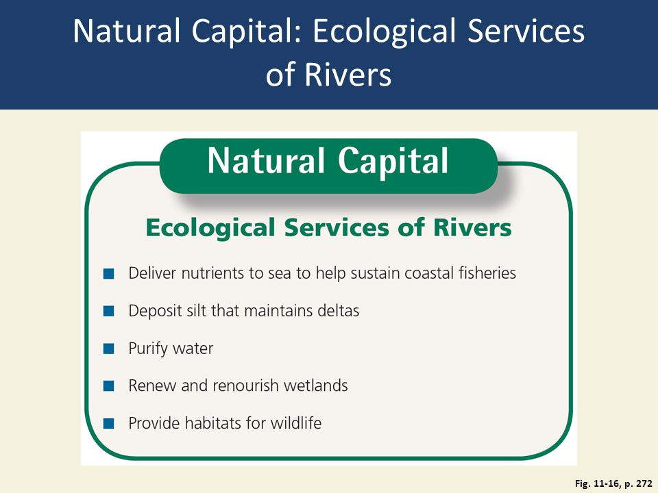 Natural Capital: Ecological Services of Rivers