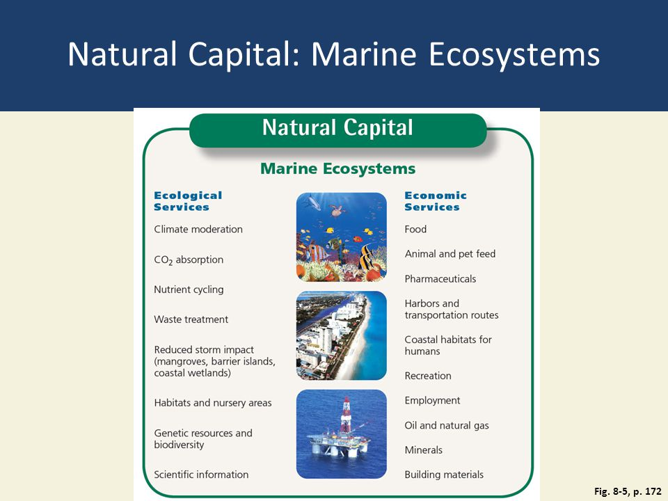 Natural Capital: Marine Ecosystems