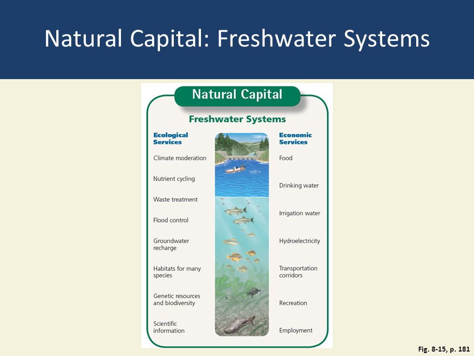 Natural Capital: Freshwater Systems
