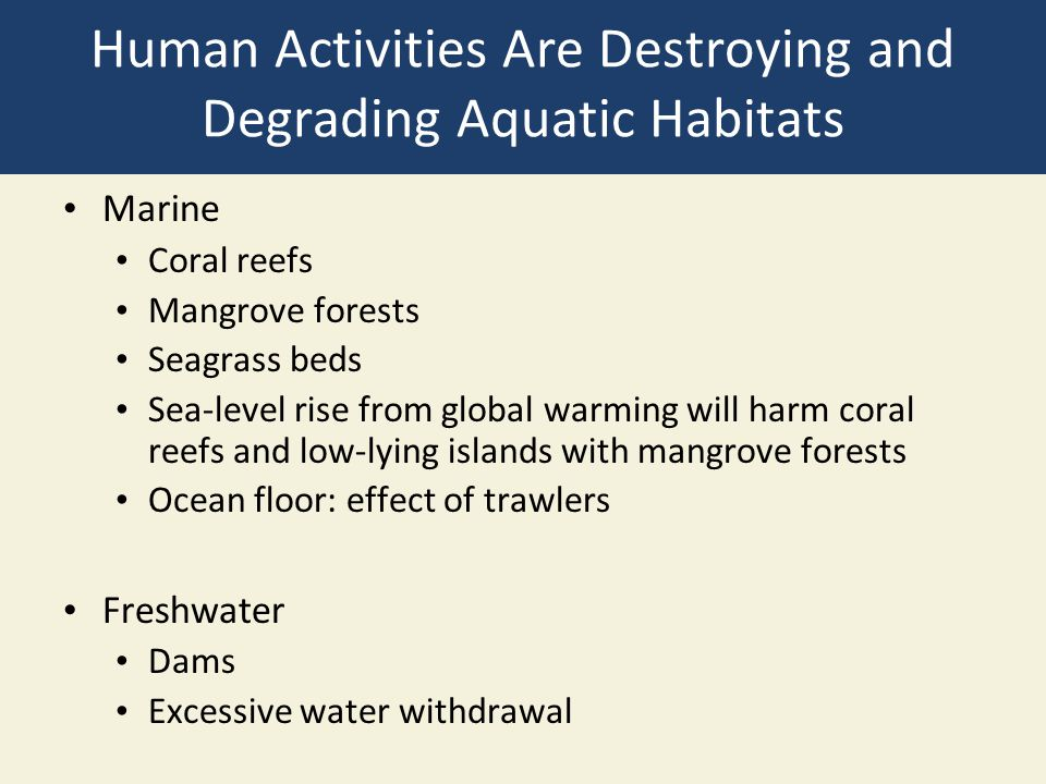 Human Activities Are Destroying and Degrading Aquatic Habitats