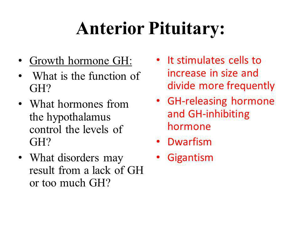 Anterior Pituitary: Growth hormone GH: What is the function of GH