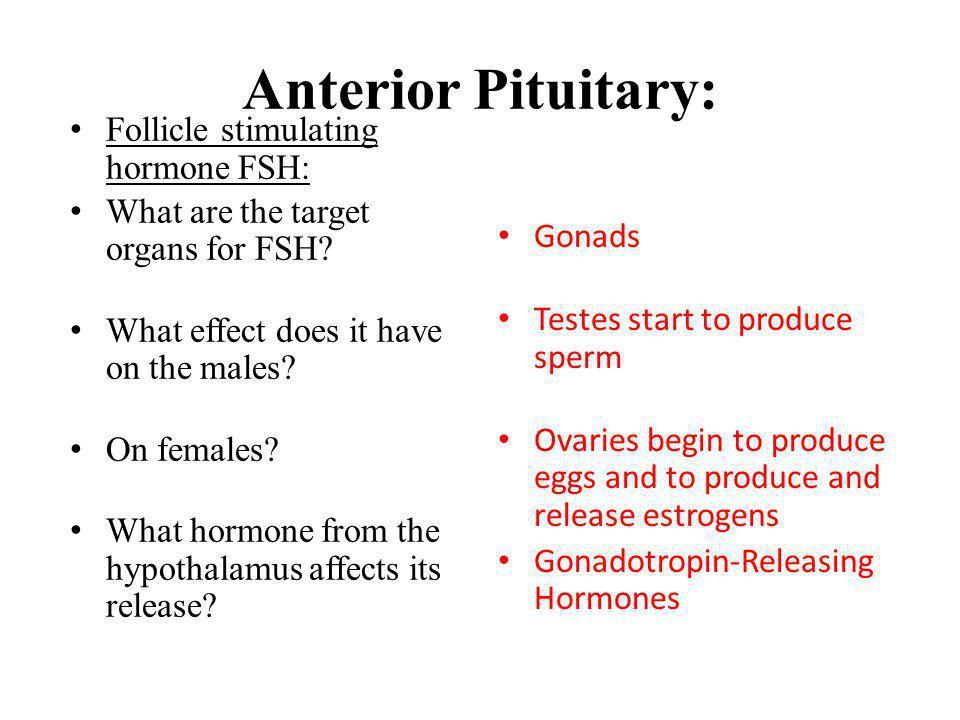 Anterior Pituitary: Follicle stimulating hormone FSH: