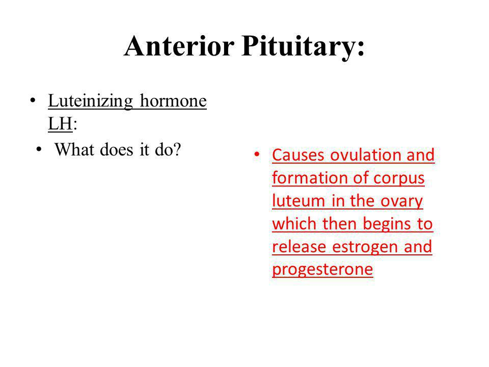 Anterior Pituitary: Luteinizing hormone LH: What does it do