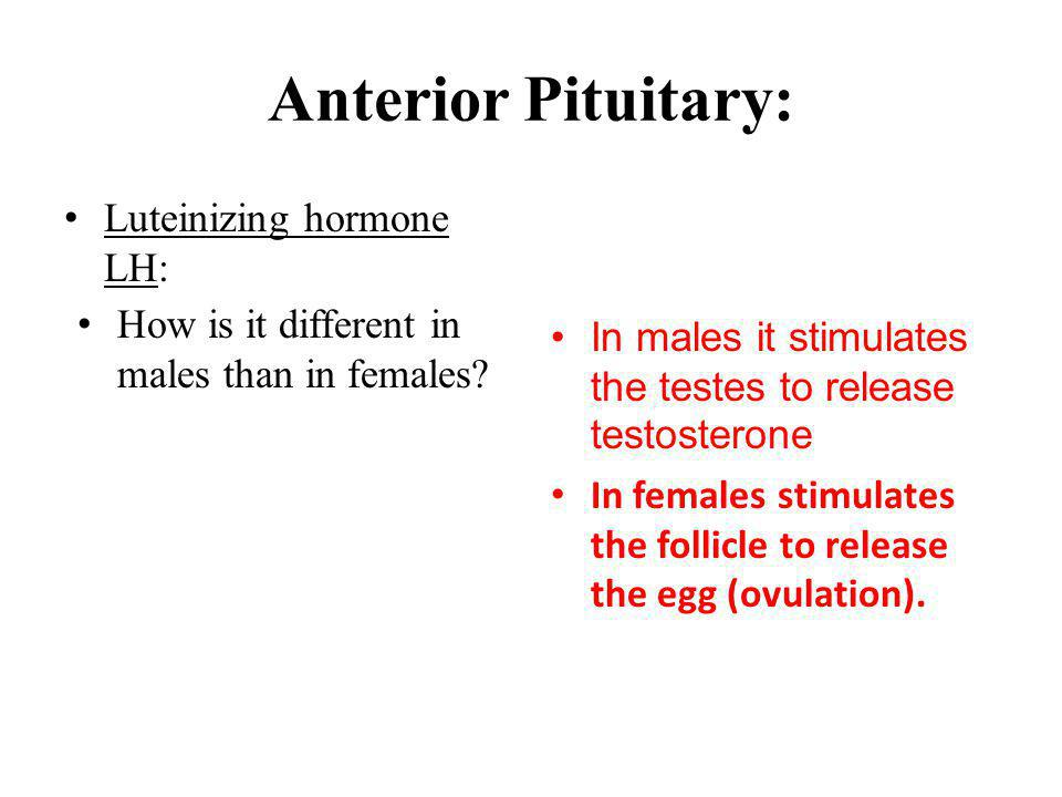 Anterior Pituitary: Luteinizing hormone LH:
